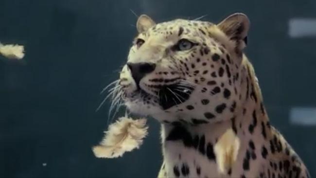 jaguar spoofs mercedes benz chicken commercial. Black Bedroom Furniture Sets. Home Design Ideas
