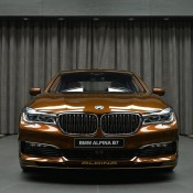 Chestnut Bronze Alpina B7-3