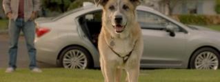 New Subaru Impreza Ad Makes You Want a Dog!