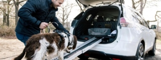 Is This the Most Dog-Friendly Car in the World?