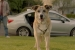 New Subaru Impreza Ad Makes You Want a Dog!
