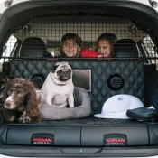 Nissan X Trail 4Dogs 1 175x175 at Is This the Most Dog Friendly Car in the World?