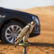 Bentley Bentayga Falconry 4 175x175 at Bentley Bentayga Falconry by Mulliner