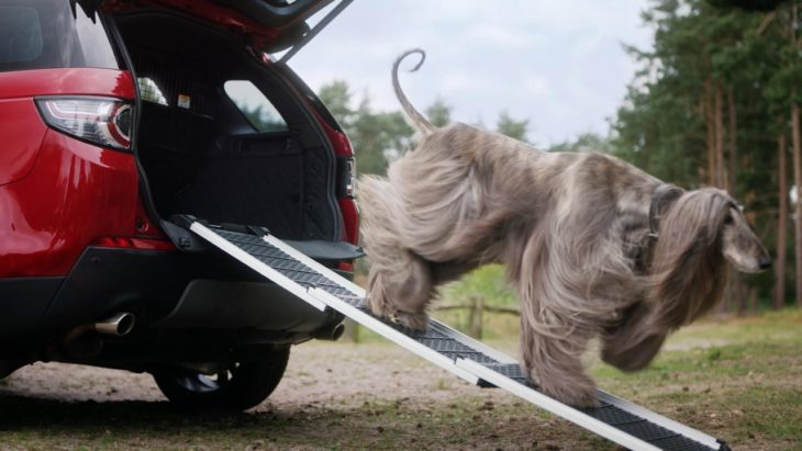 Land Rover Launches Dog Friendly Pet Packs 1 730x411 at Land Rover Launches Dog Friendly Pet Packs