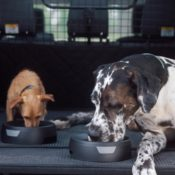 Land Rover Launches Dog Friendly Pet Packs 3 175x175 at Land Rover Launches Dog Friendly Pet Packs