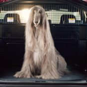 Land Rover Launches Dog Friendly Pet Packs 4 175x175 at Land Rover Launches Dog Friendly Pet Packs