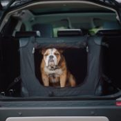 Land Rover Launches Dog Friendly Pet Packs 5 175x175 at Land Rover Launches Dog Friendly Pet Packs